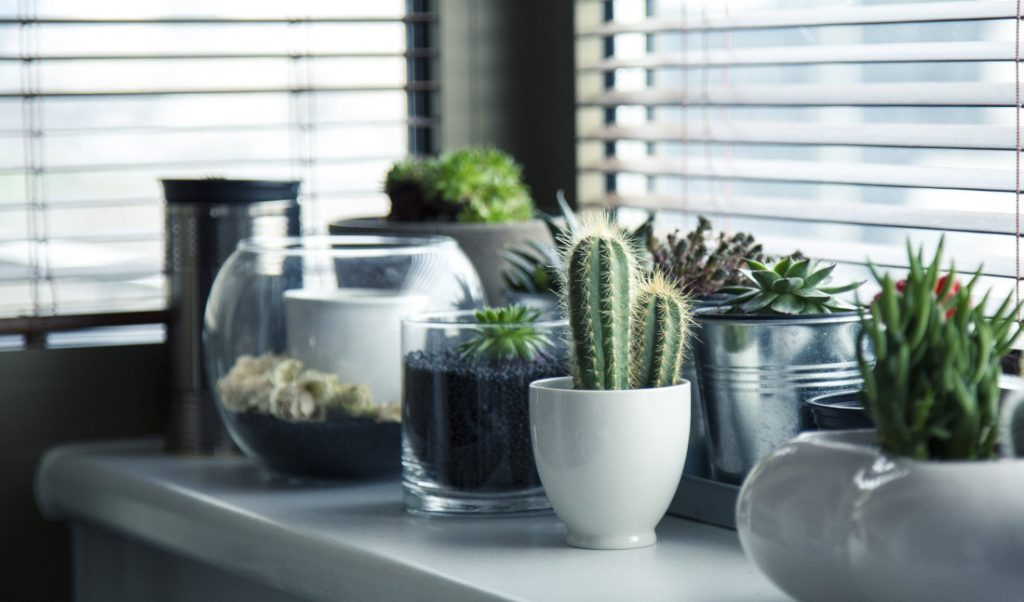 bring plants and flowers indoors