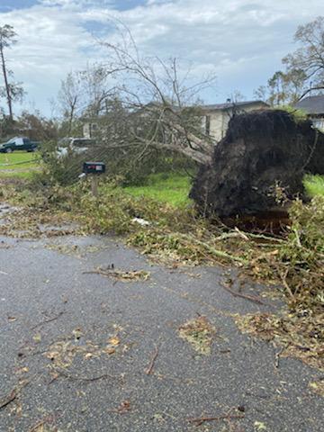 manufactured home endures hurricane laura downed tree